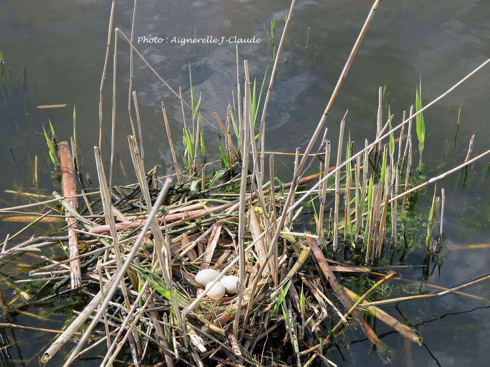 Nature - les Vert Linettes Le Crotoy