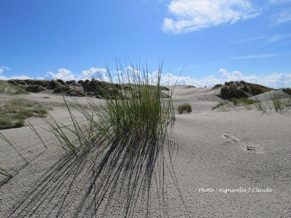 Massif dunaire - Les Vert Linettes Baie de Somme